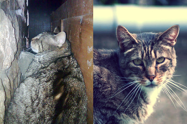 importancia de acoger gato