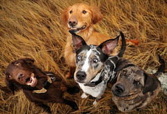 cookies! (sarah ...) Tags: autumn summer dogs cookies smiling river crazy sitting 4 kitty willow alberta begging bestinshow notmydogs pleeease