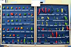 Hot Chili Lovers Society [Tolmezzo - 25 September 2011] (Doc. Ing.) Tags: italy chili stack pile carnia fvg ud friuli accumulation 2011 friuliveneziagiulia nordest tolmezzo thingsorganizedneatly