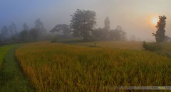 Misty Morning Panorama (Pankaj  Unlimited (pankajz.com)) Tags: morning travel india mist misty fog sunrise maharashtra pune paddyfields bhor pankajunlimited