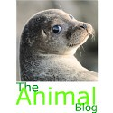 the animal blog