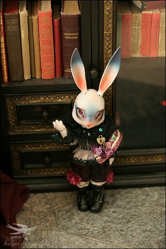 Bunny in the library I
