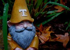 TN gnome (JustyCinMD) Tags: volunteers gardengnome universityoftennessee poppytalk