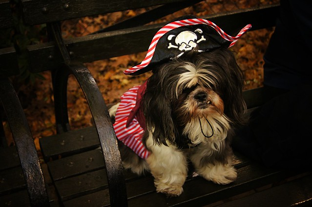 Pirate, Halloween Dog Parade 2011, Tompkins Square Park, East Village, New York City