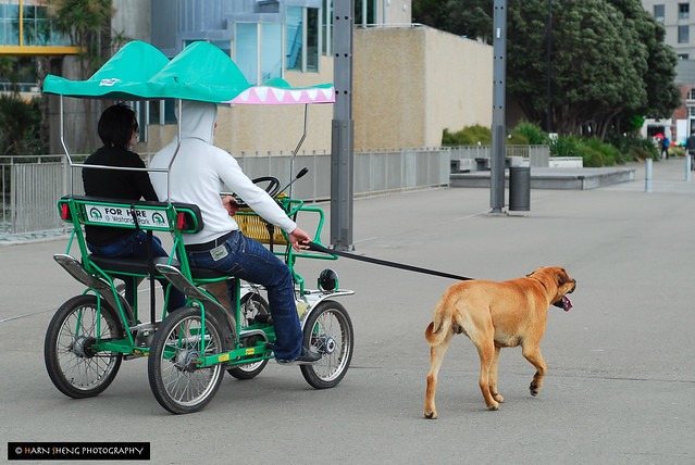 Dogcycle