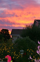 Early Riser (bigbrowneyez) Tags: pink flowers sky orange black silhouette yellow sunrise backyard colours purple gorgeous birdfeeder stunning colourful magical mybackgarden earlyriser deckview lovelyscene