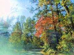 Autumns Lane (Explored) (gailpiland) Tags: road light red digital painting landscape drive lane soe coloredleaves magicpix awardtree nikonflickraward gailpiland mygearandme musictomyeyeslevel1