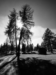 Jenesien (m.a.r.c.i) Tags: leica italien trees blackandwhite italy nature landscape italia monochrom landschaft bäume marci dlux südtirol southtyrol jenesien eisacktal törggelen dlux4