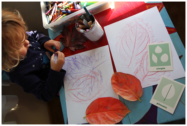 Persimmon leaf rubbings and leaf classification games