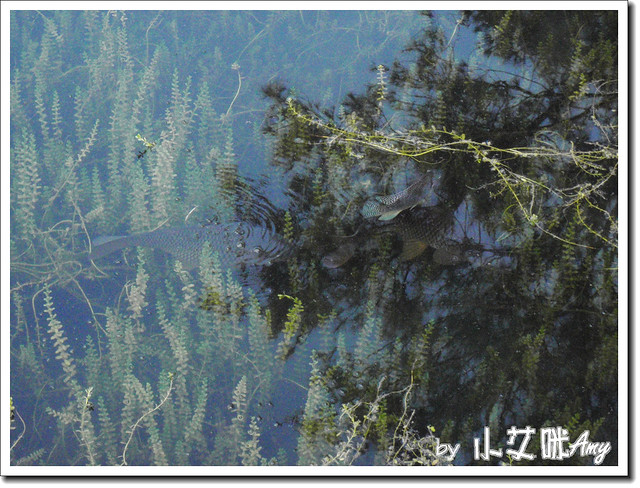 台東森林公園琵琶湖P7242406
