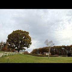 高原の朝、ちょい曇り