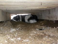 Under the deck