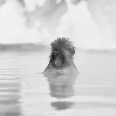 dreamy thought ( Ogawasan) Tags: winter portrait bw mist reflection square monkey nikon mood alone quiet ngc foggy peaceful calm reflet yuki onsen japo hotspring nationalgeographic snowmonkey d90  nihonzaru nihonsaru platinumheartaward ogawasan jikokudani sailsevenseas mygearandme