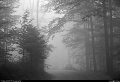 Forest with majestic gray autumn fog (yago1.com) Tags: autumn black fog forest schweiz nebel gray majestic 2011 yago1