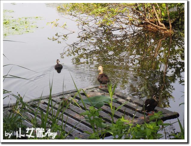 羅東林業中心P7262717