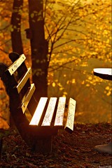 golden bench....silent ist golden  (Hausstaubmilbe) Tags: autumn sunset leaves parkbench spapark goldenlight badhall kurpark canoneos7d mygearandme mygearandmepremium mygearandmebronze canonef70300mmf456lisusm artistoftheyearlevel2