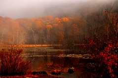 Autumn Fog (l_dewitt) Tags: morning autumn lake color colors beauty fog pond nikon connecticut newengland ct swamp marsh northeast southeastern d5000 100commentgroup mygearandme mygearandmepremium mygearandmebronze mygearandmesilver mygearandmegold dblringexcellence