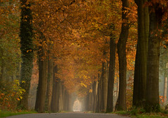 Autumn road * explore * (dewollewei) Tags: road autumn trees tree fall path herfst overijssel ommen junne platinumheartaward foorrest