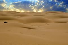waves (SAUD ALRSHIAD) Tags: camera sky sun color nature colors landscape photography golden sand nikon flickr waves desert ngc wave kingdom arabic saudi arabia riyadh ksa saud qassim saudia 2011 السعودية الرياض سماء صحراء desret سعود landscab kingdoom nfood flickraward d7000 الرشيد nikonflickraward nikond7000 flickrunitedaward alrshiad msawr سعودالرشيد دي7000 نيكوندي7000 سعودحمودالرشيد