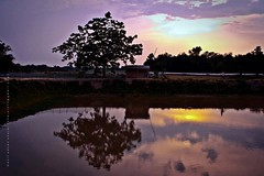 Evening (Asif Adnan Shajal) Tags: light red summer sun white house reflection tree water yellow canon river landscape photography evening photo asia day photographer district 1855mm asif bangla adnan bangladeshi saarc chuadanga shajal 1000d