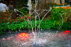 Water Display in the Bellagio Conservatory