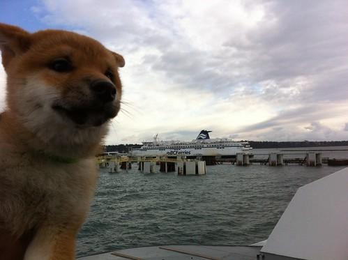 #puppy arrives #tsawwassen @bcferries by Jazzy_T