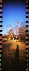 """Sprockets at a MN Park II (nbsinyk) Tags: trees sky color minnesota 35mm lomography toycamera panoramic mississippiriver sprockets dakotacounty walgreensfilm sprocketrocket"