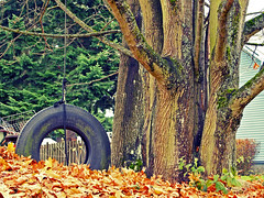 Autumn memories () Tags: old autumn red orange usa tree fall classic leaves childhood yard america season children photo washington interesting state pacific northwest image united scenic picture tire scene front swing nostalgia photograph pile nostalgic states typical