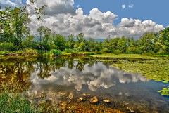 Etangs de Meienried (jd.echenard) Tags: lake reflection clouds reflections landscape pond lilly lillies lillypad paysage berne lillypads seeland tangs supershot etangsdemeienried