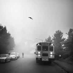 A special moment with a bird (sparth) Tags: seattle leica morning november blackandwhite bw silhouette fog square blackwhite washington foggy schoolbus washingtonstate brouillard m9 sammamish 2011 leicam9