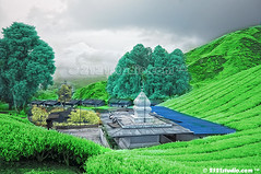 Temple @ Sg Palas Tea Plantation (Infrared) (2121studio) Tags: nature nikon ali malaysia indah cameronhighlands kuantan alam malaysianphotographer drali sgpalasteaplantation 2121studio kuantanphotographer pahangphotographer ciptaanallahswt 0139342121 nubleebinshamsubahar