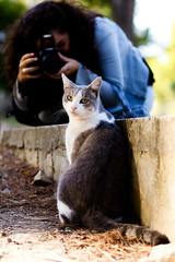 Paparazzi (matteo.0512) Tags: camera animal cat photographer photographers