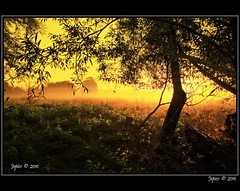 Meadow Mist. (Picture post.) Tags: autumn trees sunlight mist green nature sunrise landscape meadows silhouettes fields paysage arbre matin bej mygearandme mygearandmepremium blinkagain