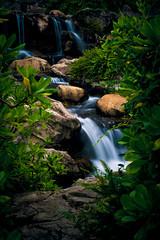 the wetland park waterfall (dawvon) Tags: park longexposure hk water flow hongkong waterfall  wetland newterritories    tinshuiwai   wetlandpark   hongkongwetlandpark