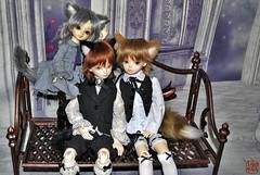 Catboys (Sadomina) Tags: doll may bjd dollfie superdollfie volks naoki abjd haku msd niky bluefairy shota ayumu kohaku yosd tinyfairy catboys