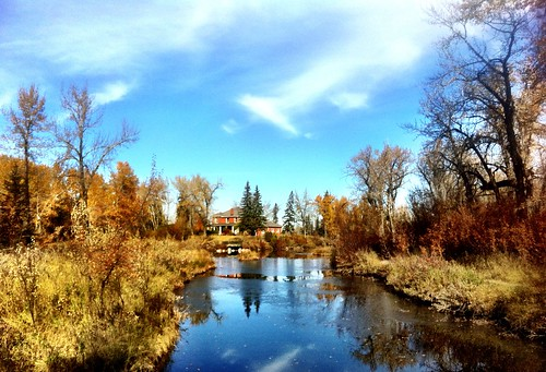 Fall At The Inglewood Bird Sanctuary