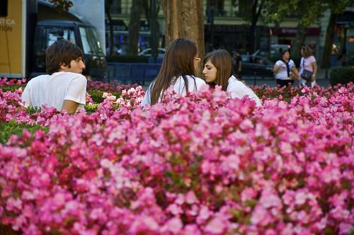 Creciendo entre las flores