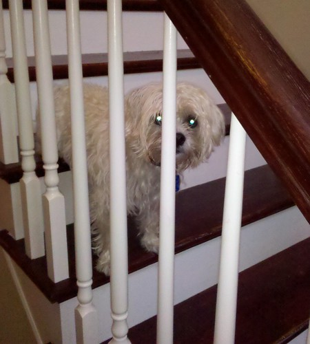 Stair Dog Stare