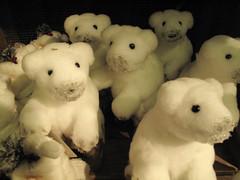 Bears (Joo Caetano Dias) Tags: bear finland helsinki helsnquia urso finlndia