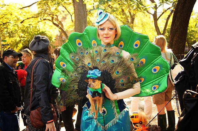 Peacock, Halloween Dog Parade 2011, Tompkins Square Park, East Village, New York City