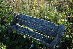 Old Bench