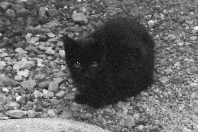 Today's Cat@2011-10-25