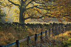 Autumn Light in Lofthouse (rgarrigus) Tags: autumn england tree fall leaves sunshine fence landscape yorkshire foliage backlit nidderdale backlighting lofthouse garrigus robertgarrigus robertgarrigusphotography