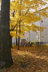 Anglų lietuvių žodynas. Žodis efficiency apartment reiškia efektyvumo butas lietuviškai.