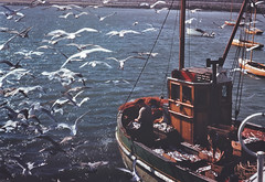 Seagulls (National Library of Ireland on The Commons) Tags: ireland sea dublin seagulls fish boats fishing fishermen harbour catch 1960s nets trawler crates 1960 fishingtrawler skerries nationallibraryofireland nasceir richardtilbrook tilbrookcollection