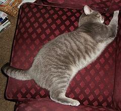Millie 24 October 2011 6851b 110 (edgarandron - Busy!) Tags: cats cute cat tabby kitty kitties tabbies millie graytabby