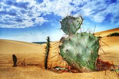 [フリー画像素材] 花・植物, 砂漠, サボテン, 風景 - ベトナム ID:201111041800