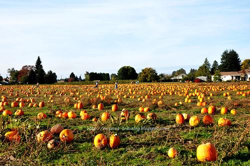 pumpkin2