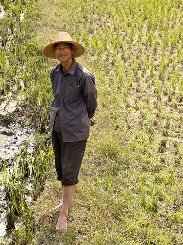 Chinese farmer in field