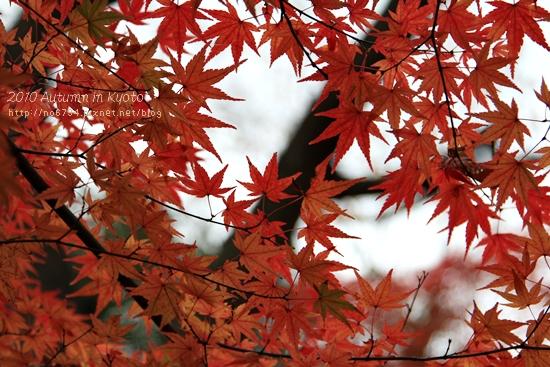 20101207_KyotoWithMoFei_1243 f
